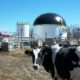 Turning poop into power: California dairies appeal for more state climate change money