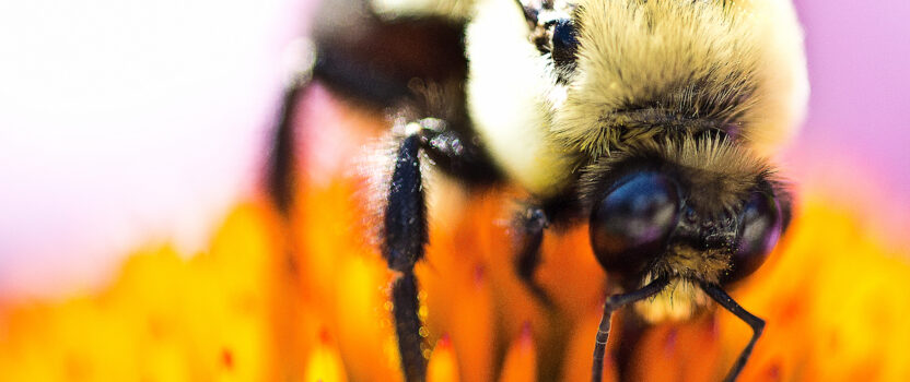 Bumblebees Need a Diverse Diet Too