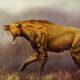 Saber-tooth surprise: Fossils redraw picture of the fearsome big cat